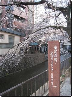 IMG_3643sakura2.jpg